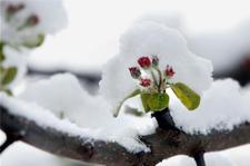 德国大雪纷飞