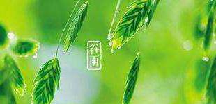 谷雨养生:陈皮赤豆粥化湿气
