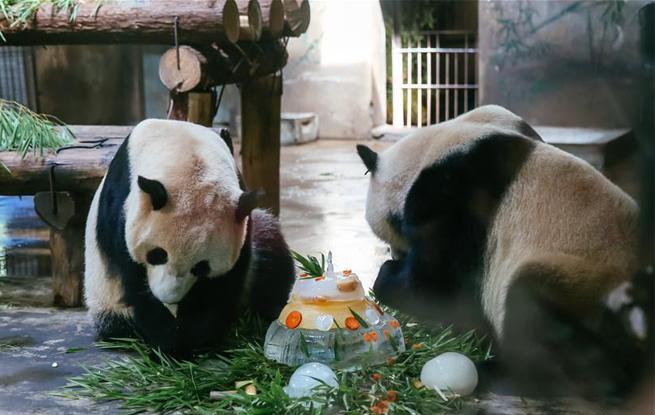 壁纸 大熊猫 动物 狗 狗狗 655_415