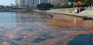 近期深圳大鹏湾海域未发现赤潮