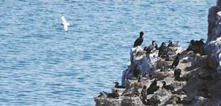 青海湖鸟岛谢客