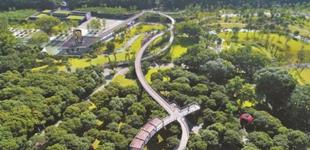 深圳创建国家森林城市见成效